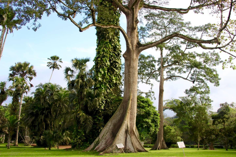 Image result for aburi botanical garden