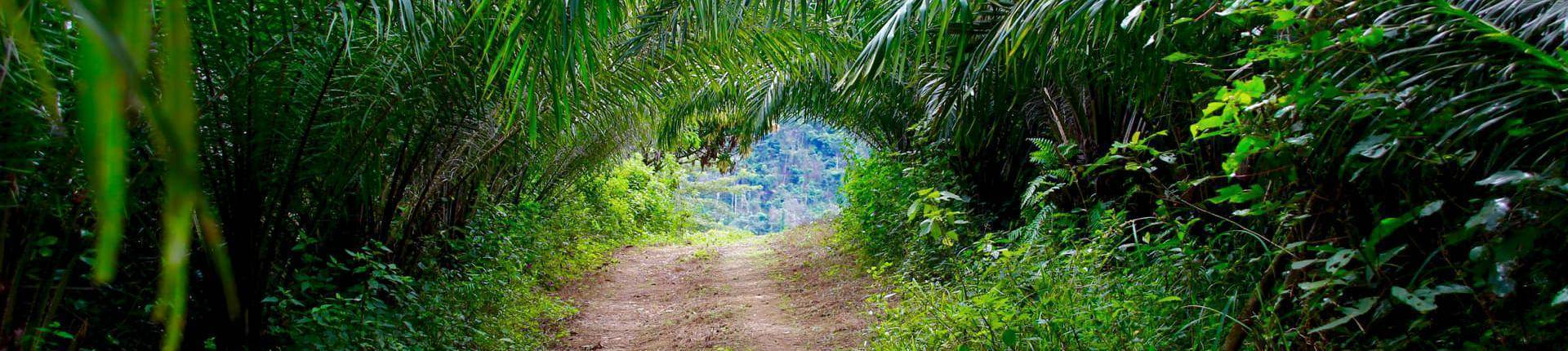 Palmenweg zum Wasserfall